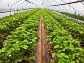 会宁去年蔬菜种植面积达10万余亩