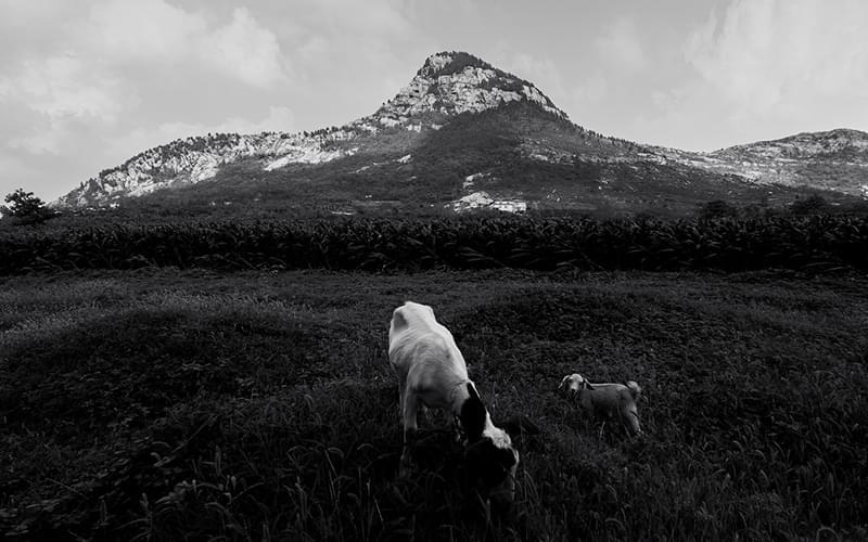 爸爸说了,只要她把羊伺候好了,等羊多了、肥了、壮了,就去卖掉两只,也叫她上学。