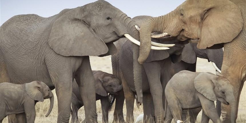 大象为什么不会患癌?人类能从中学到啥抗癌妙招