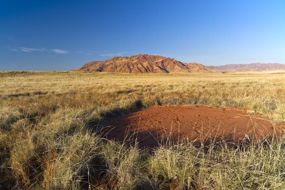 嘘!白蚁在建沙漠精灵怪圈 每个圈都像一个贮水池的照片 - 3