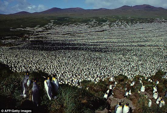 最大帝企鹅群快死绝了,以后该怎么跟子孙解释?