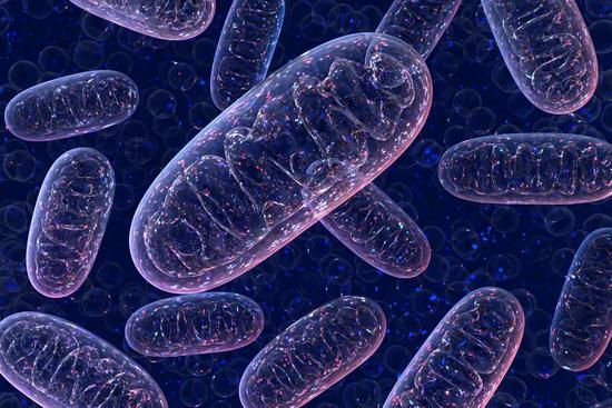 """1爹2个""""妈""""?人工改造后代基因引发人体优化担忧"""