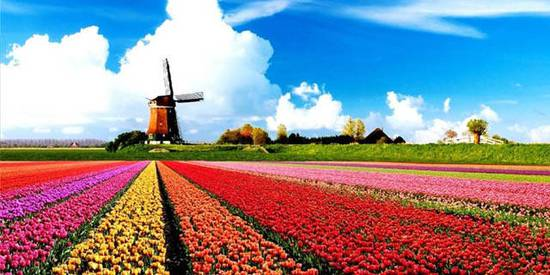 荷兰移民局对多家公司整治 吊销高技术移民资质