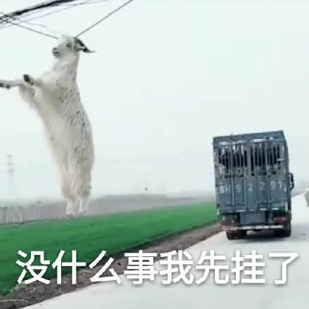 笑哭!��上的羊被���炱��:我是�l?我在哪?