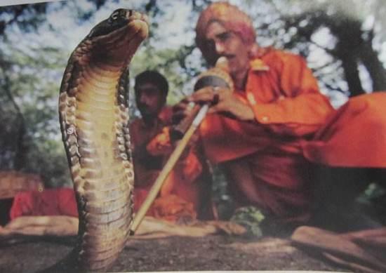 印度举办宠物节 这里的动物崇拜究竟有疯狂?
