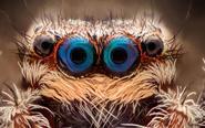 令人惊叹的动物眼睛