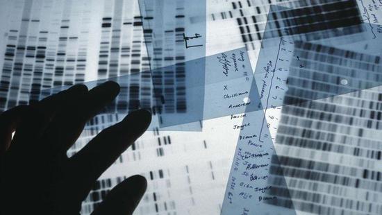 谷歌发布了一款AI工具 可以帮助基因组数据解读