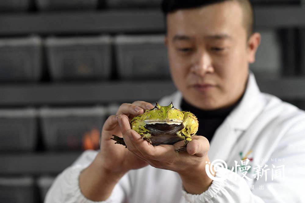 现实版蛙爸:他养的蛙比游戏中的乖 一只身价上万