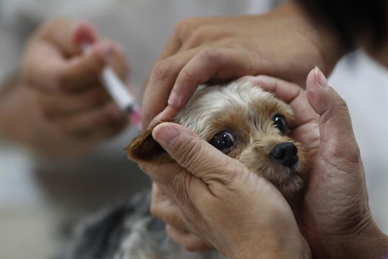 联合国推新计划:在2030年不再让狂犬病致人死亡
