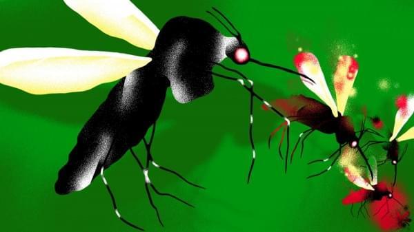 "Alphabet正利用人工智能""专致""蚊子不孕不育的照片 - 1"