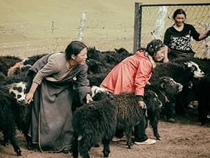 川西草原人家住黑帐篷不懂汉语