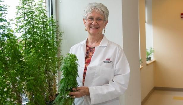 植物粉末挽救了生命垂危的疟疾患者的照片 - 3