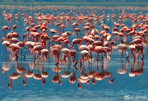 支付宝正式进入非洲:肯尼亚成为首个国家的照片 - 2