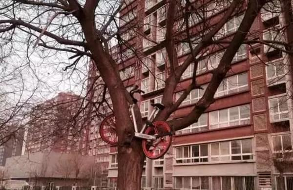 100%返现、免费骑 共享单车烧钱争一哥的照片 - 4