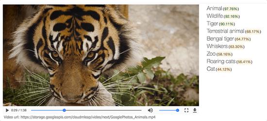 谷歌新机器学习API支持识别视频中的物体