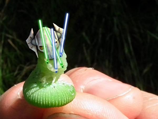 一只青虫引发的PS大战的照片 - 11