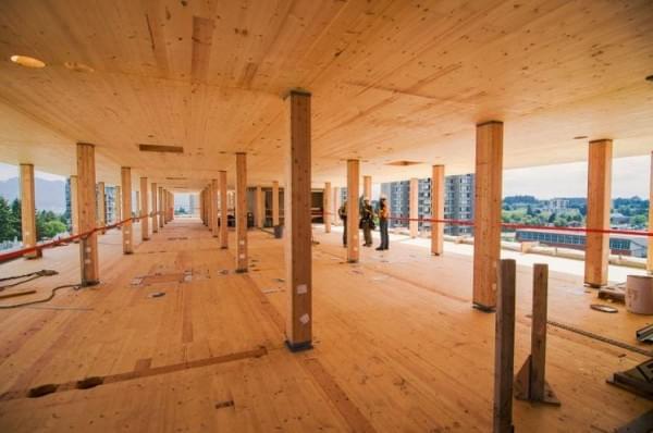 """""""树屋""""设计到80层了 木材也能建摩天楼?的照片 - 2"""