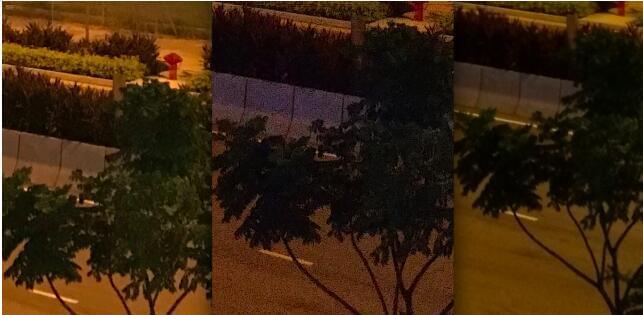 《福布斯》:iPhone 7拍照并不比LG V20和华为P9好的照片 - 12