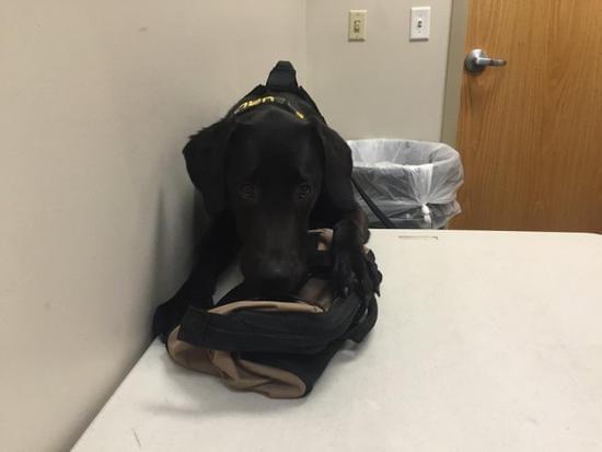 能闻出色情片 – 这就是神一样的超级警犬的照片 - 7