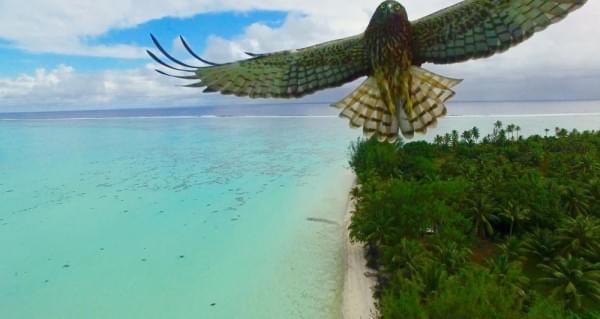 2016年最惊艳的20张无人机航拍摄影作品出炉的照片 - 10