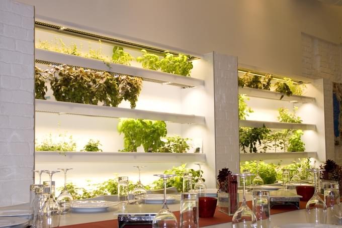"""想在家里种菜?Herbert让家里的每一面墙都变成""""菜地""""的照片 - 5"""