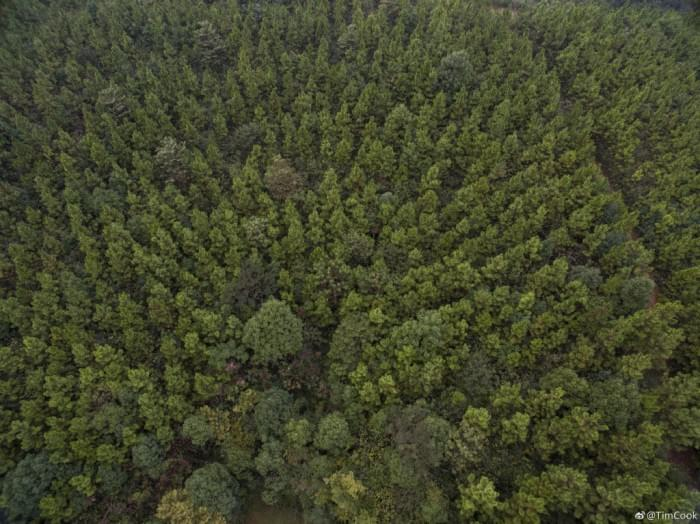 库克发微博庆祝植树节,呼吁保护森林资源的照片 - 3