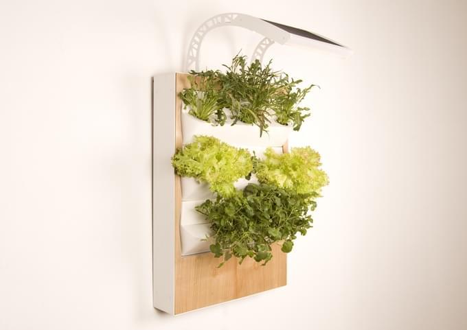 """想在家里种菜?Herbert让家里的每一面墙都变成""""菜地""""的照片 - 3"""