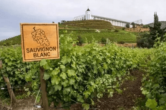 怎样挑选口感极佳的白葡萄酒?