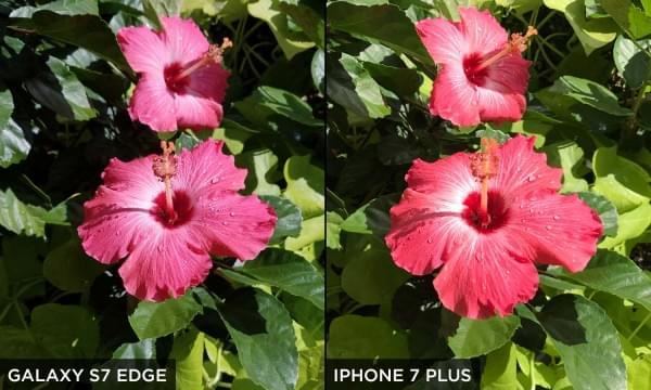 三星Galaxy S7 Edge和iPhone 7 Plus相机拍摄对比的照片 - 2