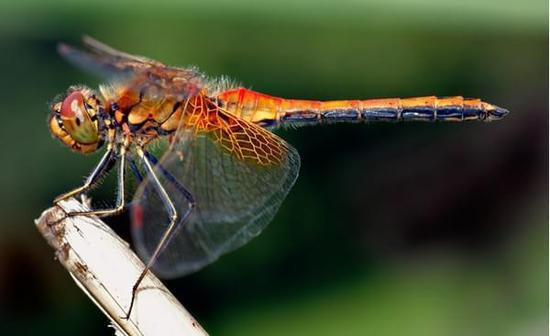 史前巨型昆蟲時代如何終結