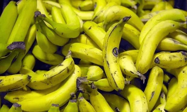 我們吃的香蕉,搞不好馬上就要絕種了