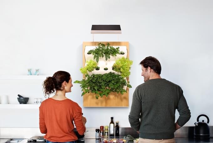 """想在家里种菜?Herbert让家里的每一面墙都变成""""菜地""""的照片 - 1"""