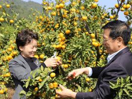 永州首届柑橘文化旅游节开幕,想吃橘子的赶紧来
