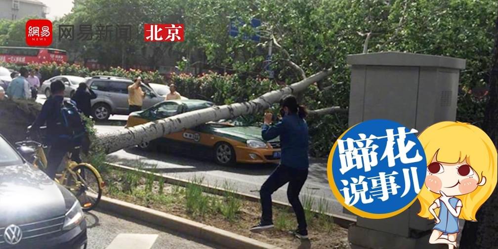 """吹倒大树又让坠物砸伤路人,北京这场大风真""""妖"""""""